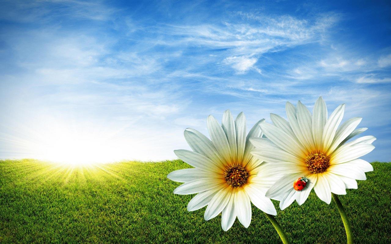 Resultado de imagen de imagen de primavera